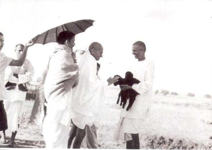 Mahatma Gandhi fondling a newborn two hours old goat carried by ashramite Balwant Singh. September 1938.